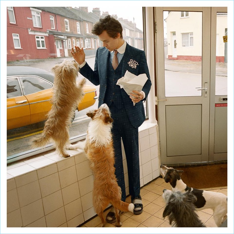 Singer Harry Styles fronts Gucci's fall-winter 2018 tailoring campaign.