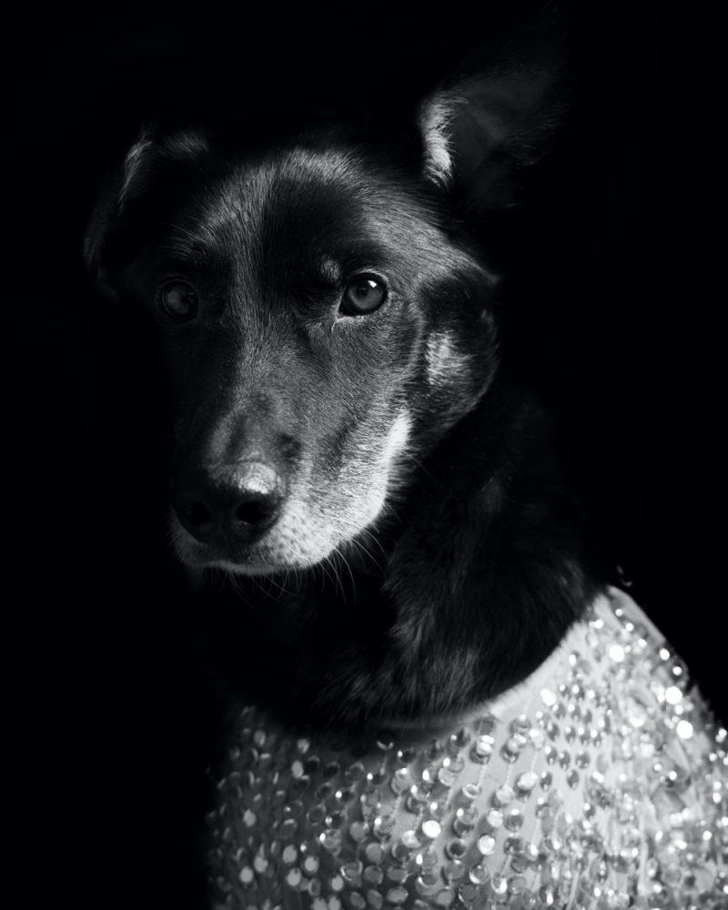 Dog Sequins