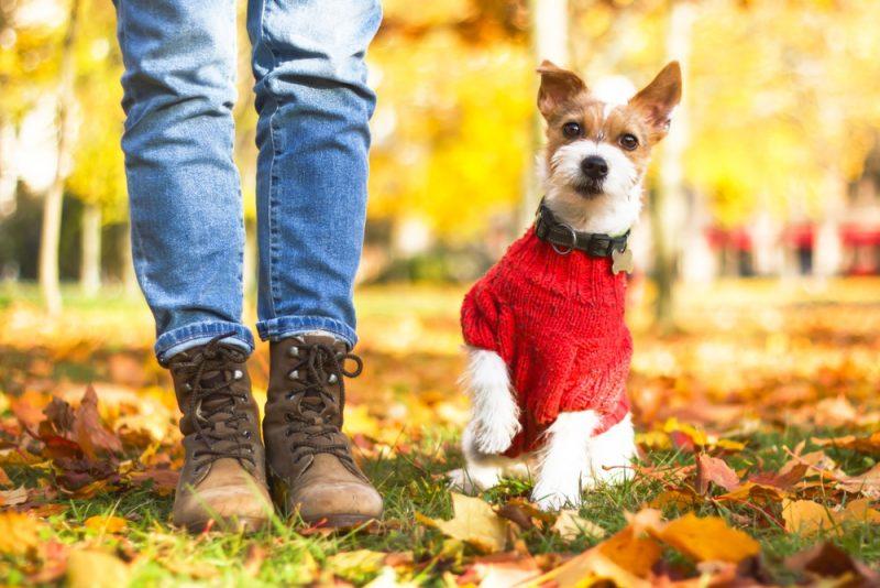 Man Walking Dog Wearing Boots