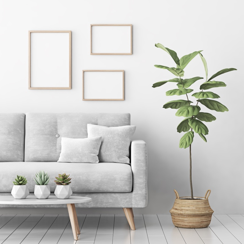 Grey Couch Picture Frames Plants Home Decor